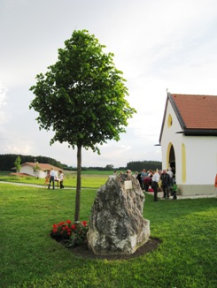 jubiläumslinde in 2011